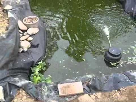 My pond turned into a fish orgy, also i put the plants in there.wmv