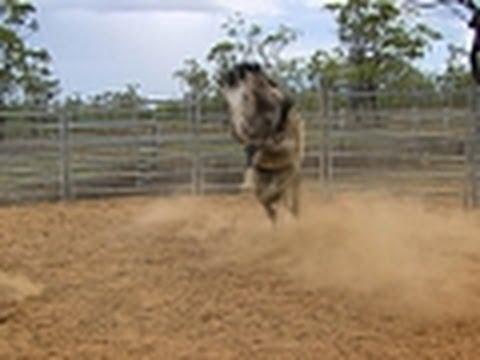 Breaking Wild Horses