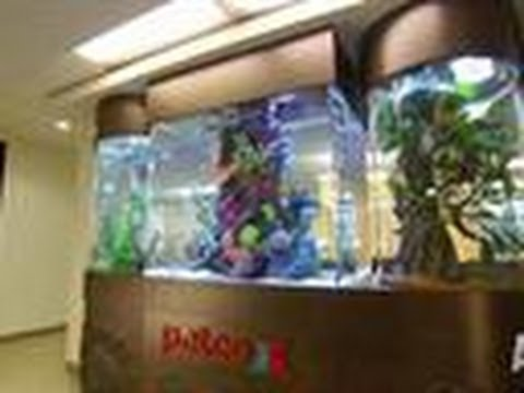 Reveal: Petco Tank | Tanked!