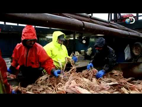 Deadliest Catch - Capt. Tony's Rockin