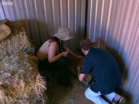Baby koalas - Born to Be Wild: Natalie Cassidy in Australia - BBC