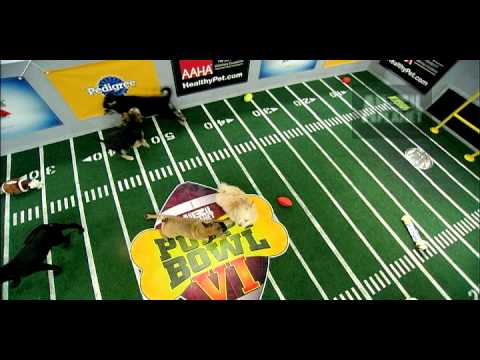 Puppy Bowl VI- Ruffness