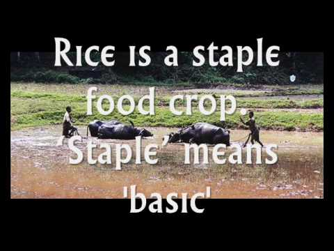 Intensive Peasant Farming.wmv