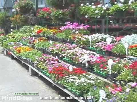 Perennials in the Landscape Part 2