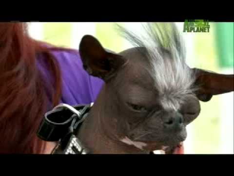 World's Ugliest Dog - Spooky Dog