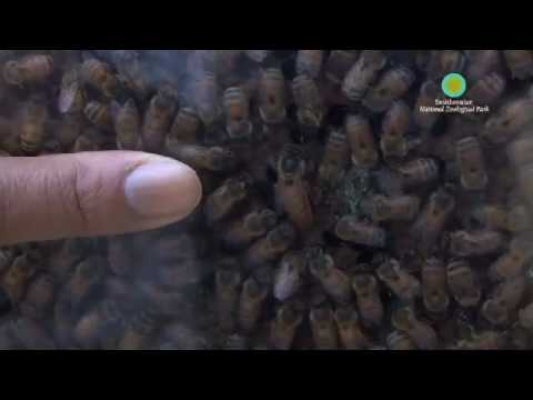 National Zoo Gets New Honey Bee Colony