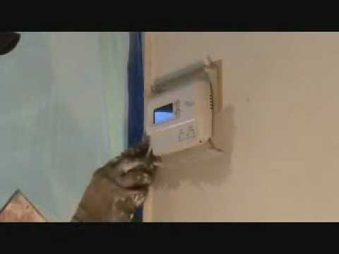 Patching around a thermostat...Part 1