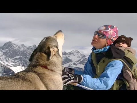 Running with Wolves - How to Howl Like A Wolf