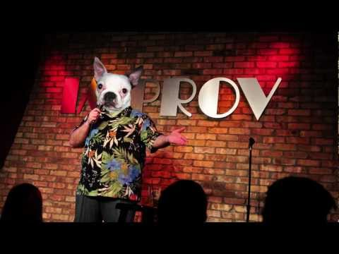 Stand-Up Dog: Pilot