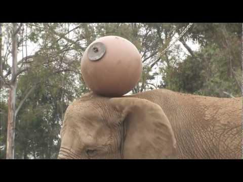 Tembo Head Ball Olympics