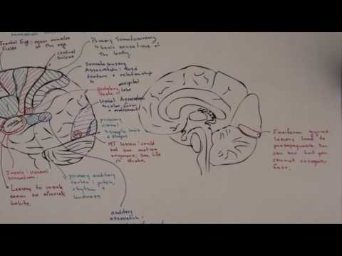 Part 3:  Functional Brain Areas