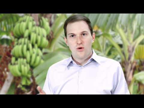 Stuff From the Future- What is the future of the banana?