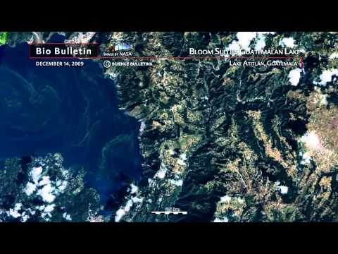 Science Bulletins: Bloom Sullies Guatemalan Lake