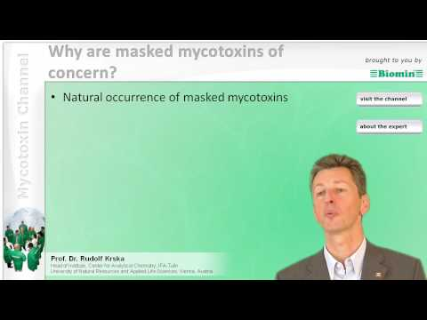 Why are masked mycotoxins of concern?