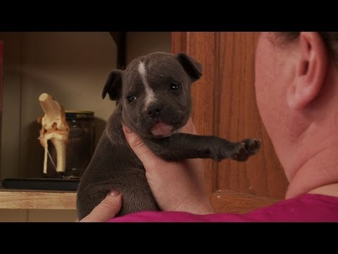 The Incredible Dr. Pol - Puppy Love