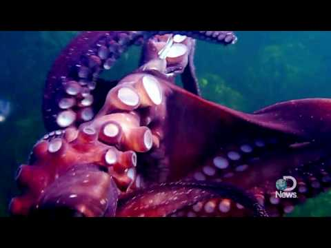 Octopus Steals My Video Camera Explained