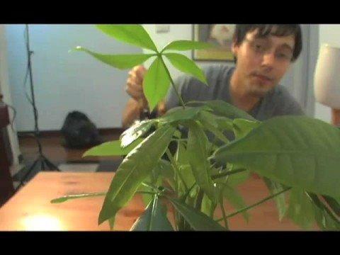 Nature, Plants, Animals: Best Short Films # 2