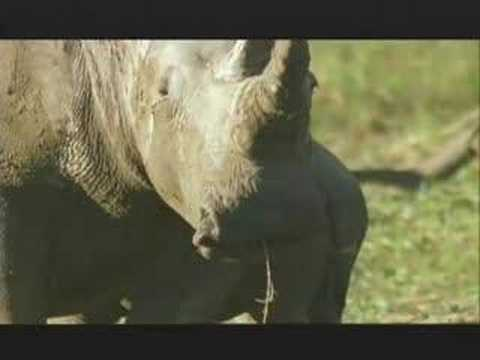 "NATURE "" Rhinoceros "" 