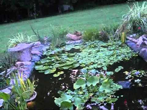 Pond Update  Water Hyacinth Water Lettuce PLANTS REMOVED