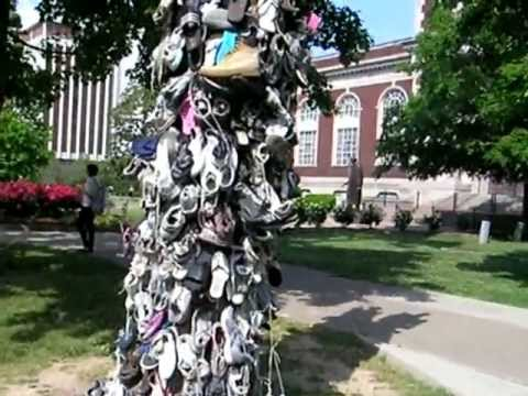 Shoe Tree:  Geographic Reflections