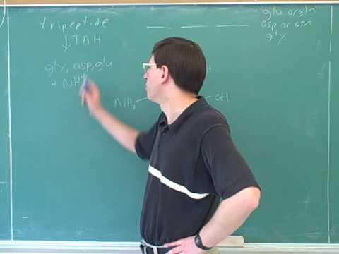 Organic chemistry: Amino acids and peptides (24)