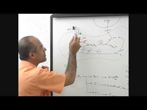 Respiration Process 6/6