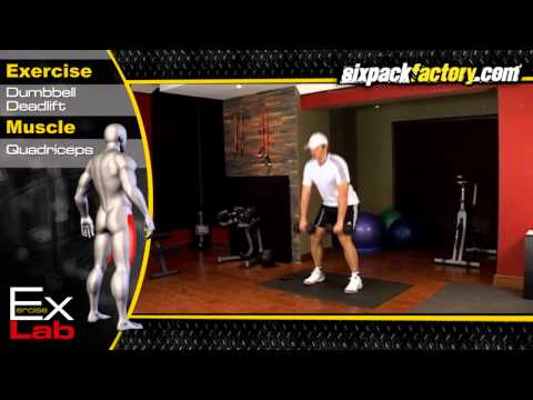 Dumbbell Deadlift : Best Leg Exercises ( Quadriceps Exercises )