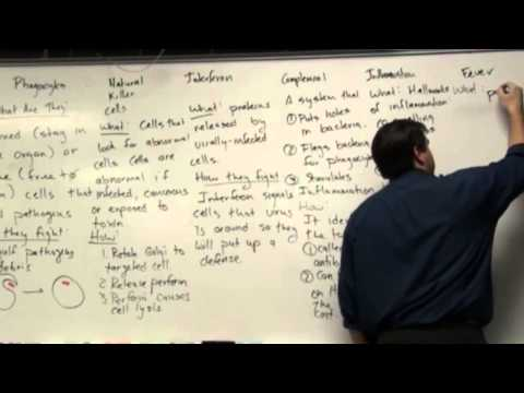 Immune System in Class: Part 2b, Second Line of Defense.mp4