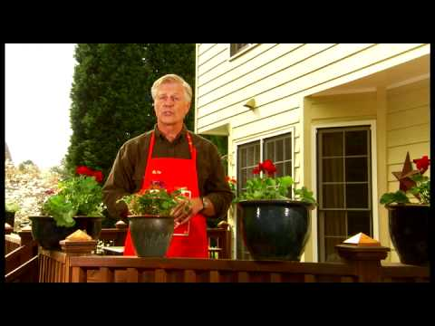 How to Plant Flowers - The Home Depot