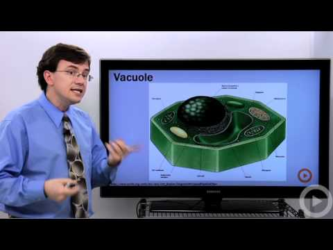 Vacuoles-Vesicles