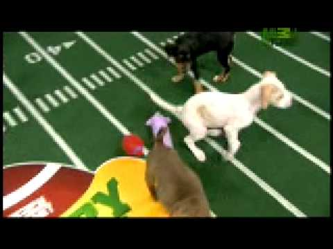 Puppy Bowl Classic - Tackles and Fumbles