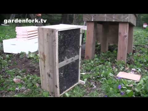How to hive a bee package Beekeeping for Beginnners GardenFork.TV Beginning Beekeeping