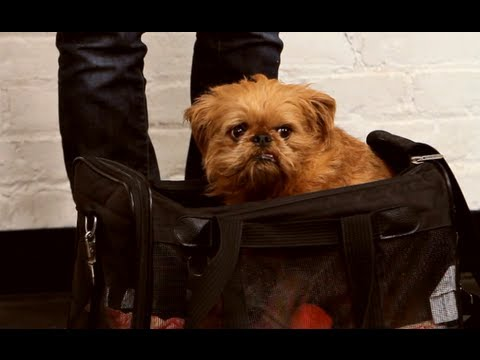 Dog Training: Bag Training and Traveling with Your Dog