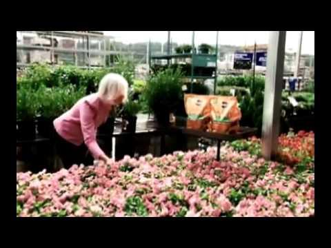 Ideas de paisajismo y jardinería para su patio trasero