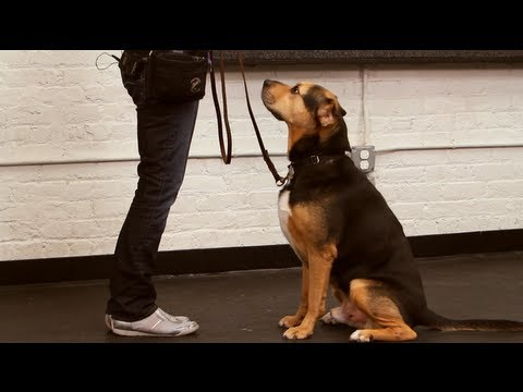 Dog Training: How to Teach Your Dog to Sit