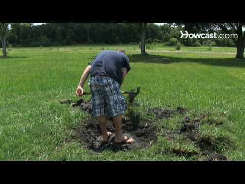 How To Plant a Shade Tree