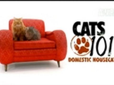 Cats 101: Domestic Housecat