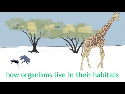 Adapting and Living Together (Chapter Intro) - Ecology and Environment - The Virtual School