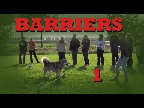 Invisible Barriers Part 1- Clicker Dog Training Tricks