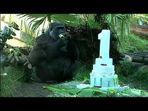Gorillas Celebrate First Birthdays
