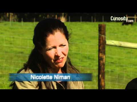 Nicolette and Bill Niman: The Vegetarian and the Rancher