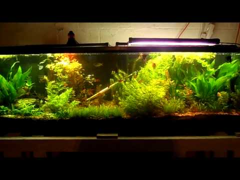800 Subscribers !! Big Things Coming To My Aquariums