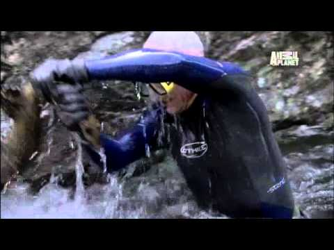River Monsters: Man vs. Giant Salamander