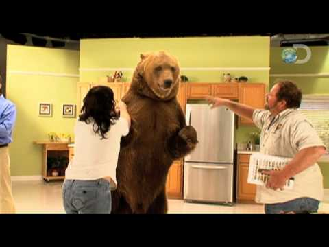 Pitchmen - A Grizzly Demo | Bear Market