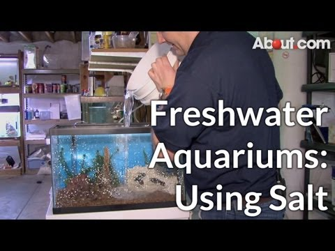 When to Use Salt in Freshwater Aquariums