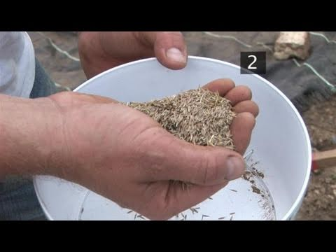 How To Sow Seeds For Your Lawn