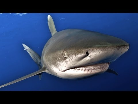 Ocean Soul: Close Encounters with a Dangerous Shark