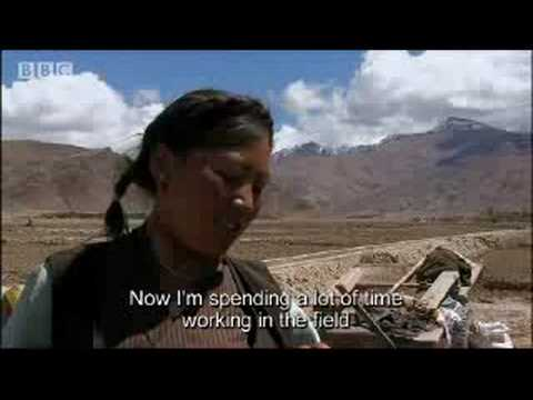 Marriage and work in Tibet - A Year in Tibet - BBC Travel & News