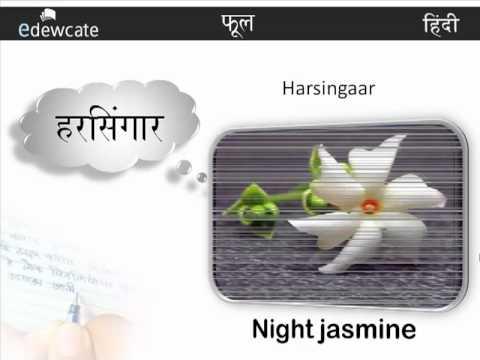 Learn Hindi : Flowers