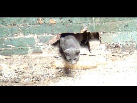 Wall Cat